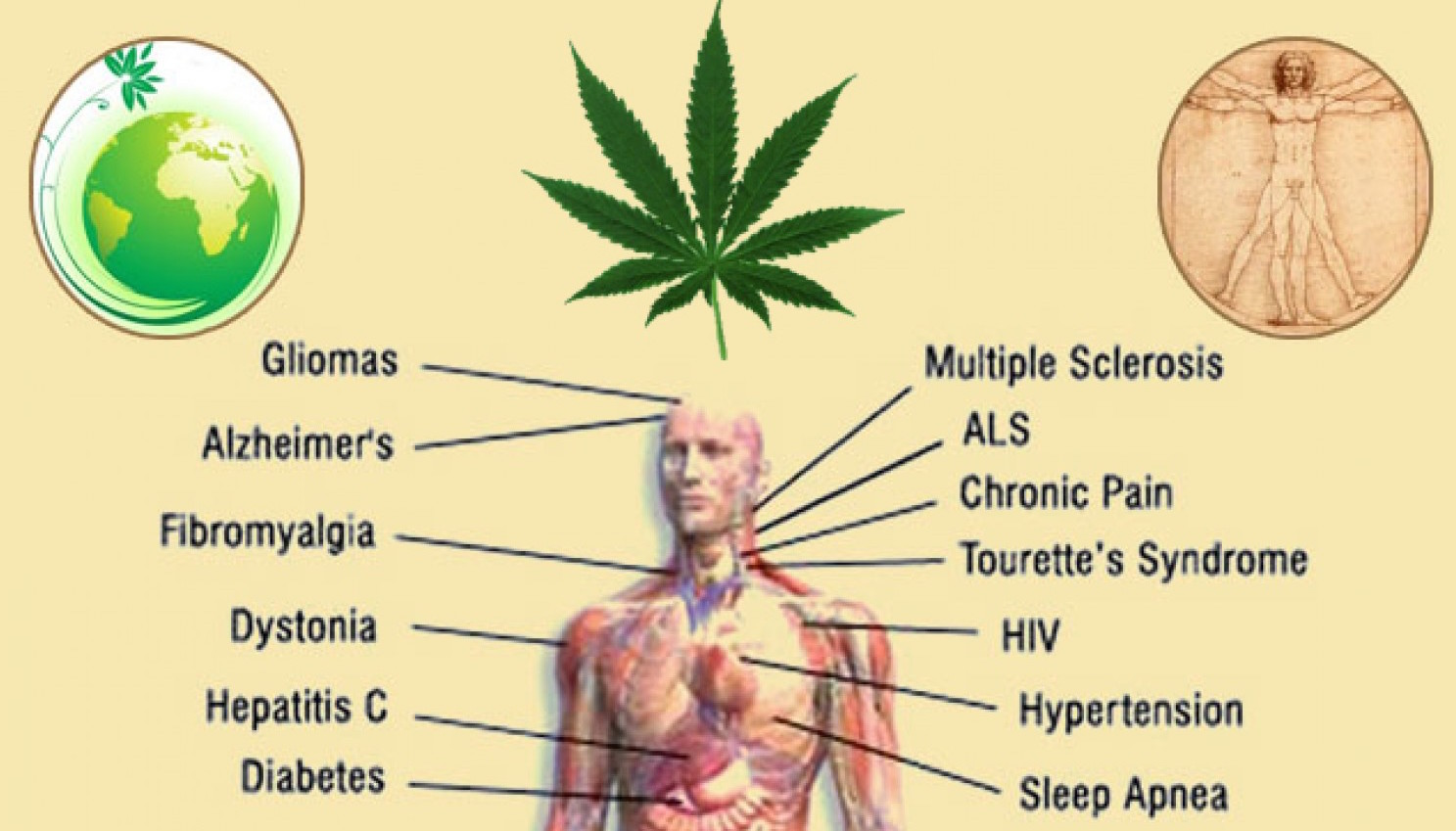 an overview of marijuana its different strains the war on drugs and its medicinal benefits Medical marijuana benefits knowledge to blow your mind point is, no matter what your condition is, using marijuana medicinally could alter your view of your world taking that one step further, high cbd strains could provide you with the relief you need, without the side effects that would limit its.
