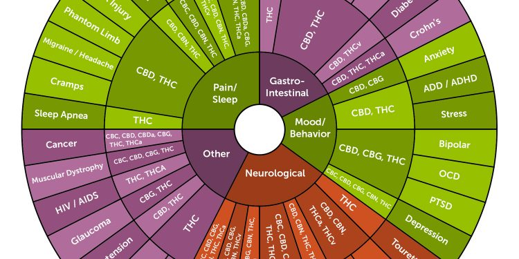 Cannabinoids 101: What Makes Cannabis Medicine?