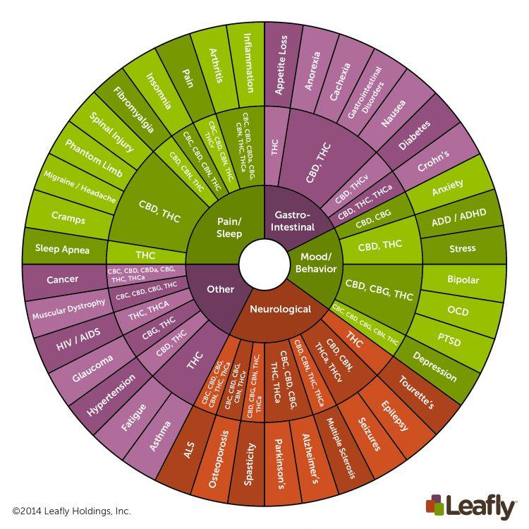 Cannabinoids 101: What Makes Cannabis Medicine?